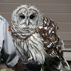 "Barred Owl..if you ask Aidan, he knows their call is, ""Who cooks for you? Who cooks for yall?  :)"