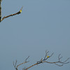 see the goldfinches on the tree?