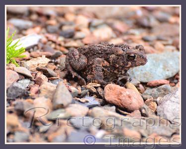 Toad Rocks