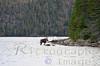 Lake Superior, Caribou