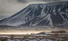 Collyer_Iceland-1577