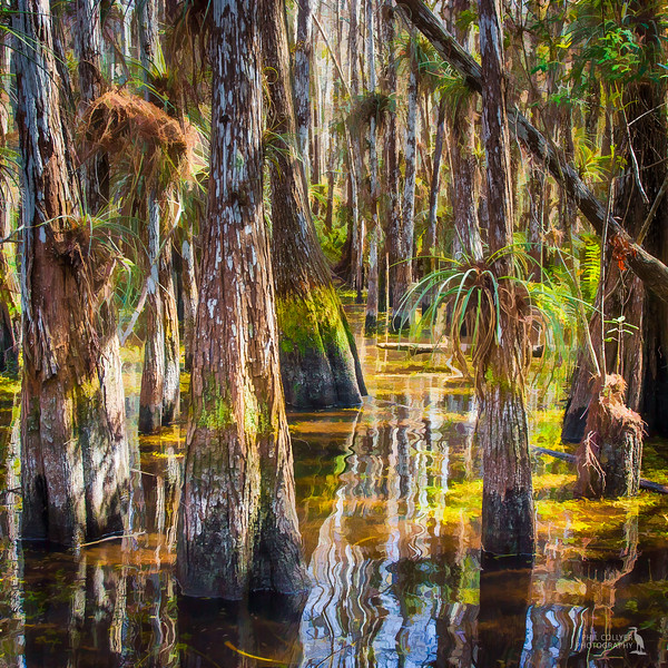 Cypress Dome Swamp