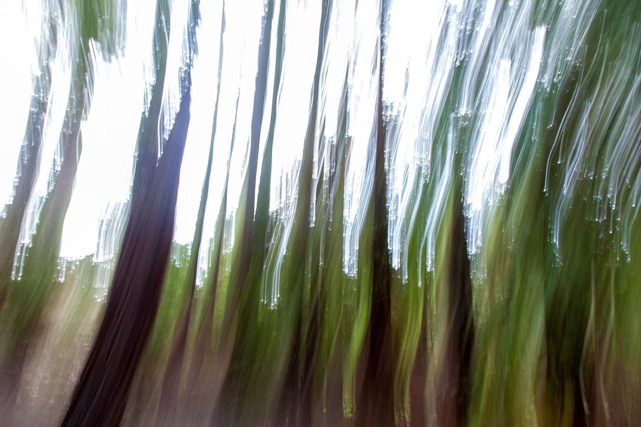 Redwood_Grove_20141210_0049
