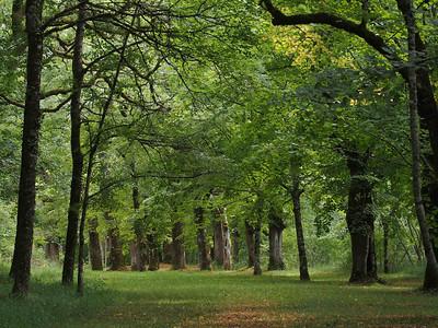 Puyguilhem Castle Park