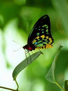 (G025) Butterfly Pavillion - Denver