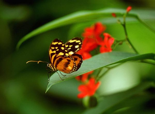 (G026) Butterfly Pavillion - Denver
