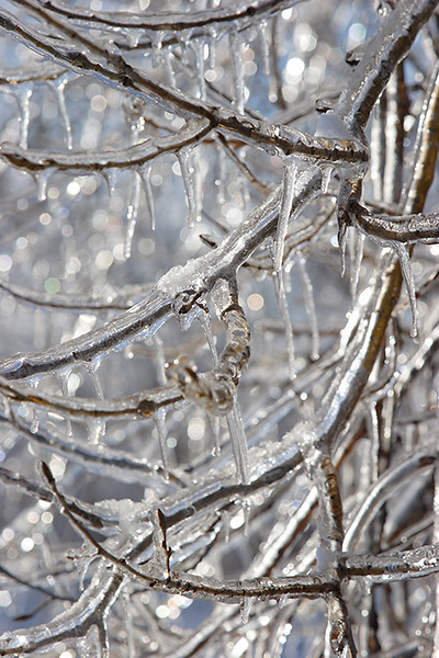 (DT-0612) Ice encased tree branches - Nebraska