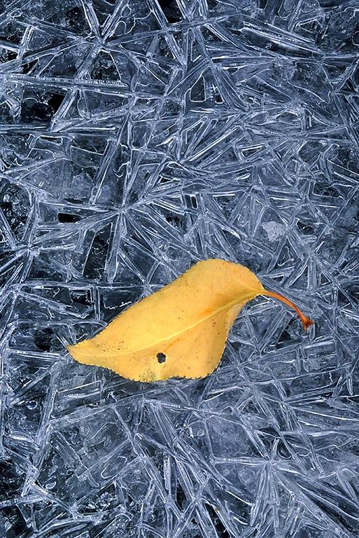 (DT-0320) Ice pattern and leaf detail; Sangre de Cristo Range, Colorado
