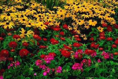 (J025) Floral Garden MIx