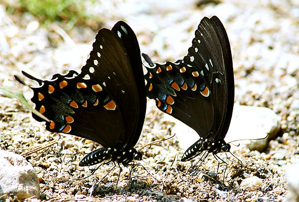 This is not a composite. Two butterflies doin their butterfly thang at White Clay State Park, Newark, DE - View Large via below...