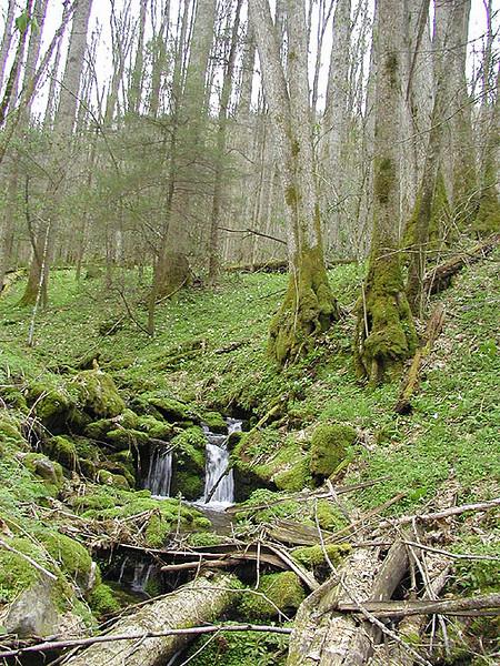 Small mossy cascade near CS 48 along Chasteen Creek Trail<br /> GSMNP April 13, 2007