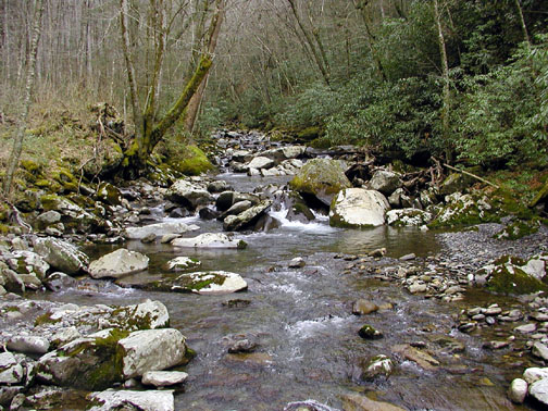 Looking upstream on Bradley Fork from the Iron Bridge<br /> Cabin Flats Trail <br /> GSMNP<br /> March 07<br /> March 07