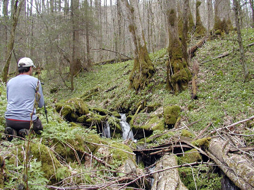 Rich photographing one of many cascades we passed this day. <br /> Chasteen Creek Trail <br /> GSMNP April 13 2007