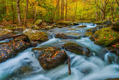 Tremont Stream in Early Autumn