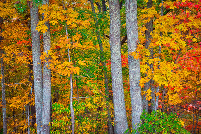 Bright Fall Forest Scene