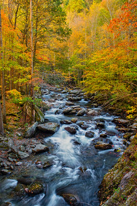 Colorful and Roaring Stream in Autumn