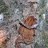 Toad along Deep Creek Trail