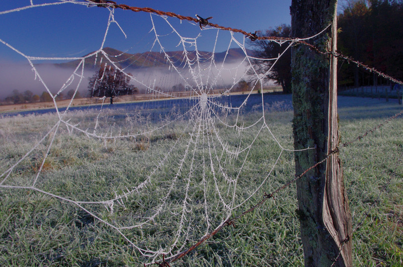 Spiderweb covered in frosty dew.