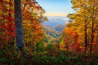 Smoky Mountain Sunrise Through the Trees