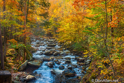 Sunny Stream with Fall Colors