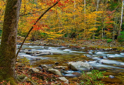 Fall Stream with Warm Colors