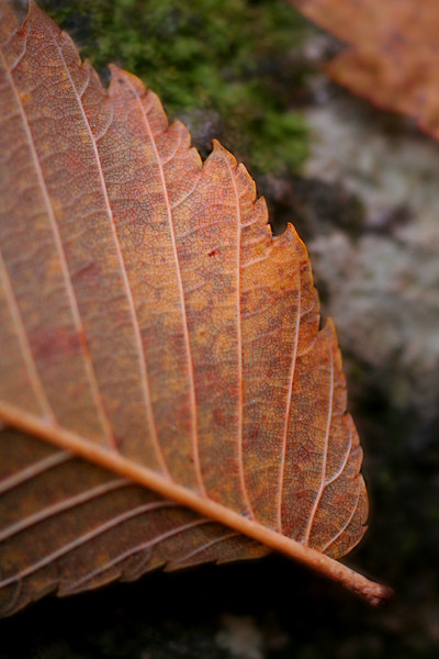 A close up of a leaf during the fall of 2008.