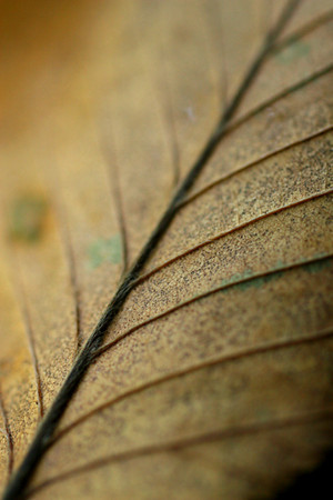 Close up of a leaf during the fall of 2009.