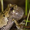Tree frog - May 3, 2013