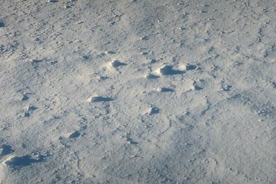 Snow 02082021b 847