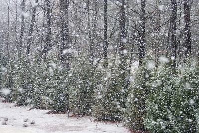 Snow Day 2009-6129