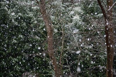 Snow Day 2009-6125