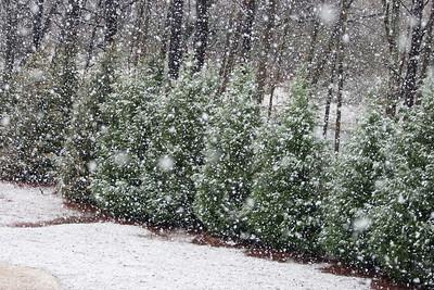 Snow Day 2009-6128