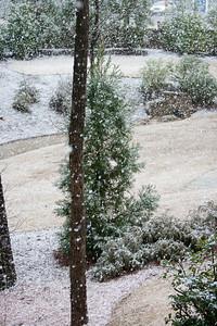 Snow Day 2009-6126