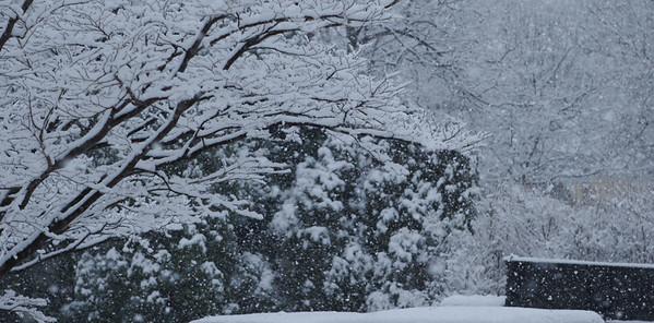 Snow Day, Kensington, Md.