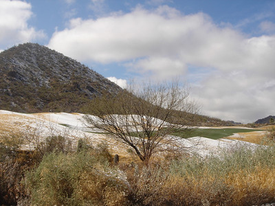 Snow Day in Tucson