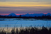 Snow Goose Sunrise 01 copy