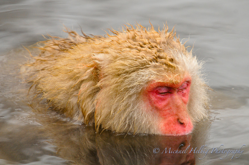 Snow Monkeys - Nagano Prefecture