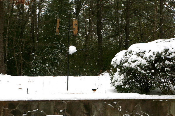 Snow Morning and Birds