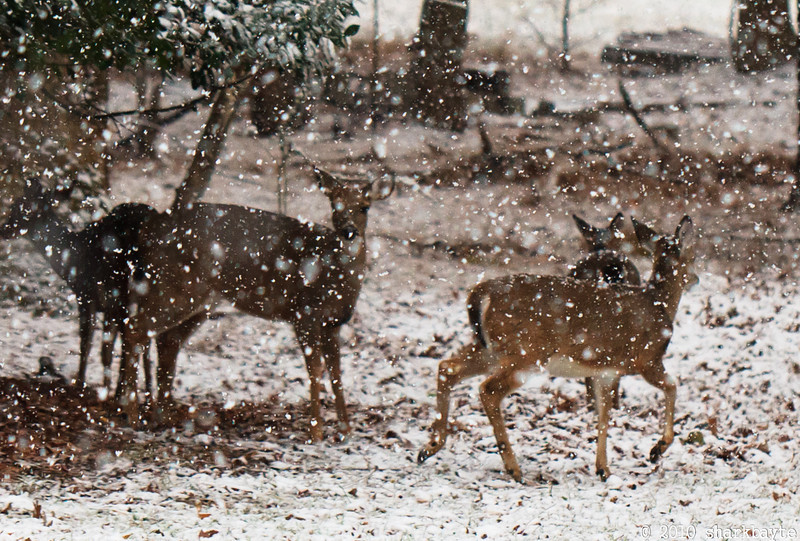 It started snowing today. We were told would unlikely to make it to the ground, but if it did, it wouldn't stick!! My lying eyes! My girls came back for a visit.