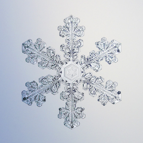 """Unframed Print: Snowflake 8649 - $25  Framed Print: Snowflake 8649 - $50  Blank Greeting Card: Snowflake 8649 - $3  Please click here to order: <a href=""""mailto:ajstudio@alaska.com?subject=ATTENTION: SNOWFLAKE ORDER"""">ajstudio@alaska.com</a>"""