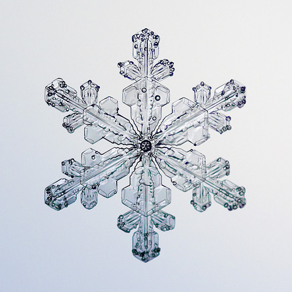 """Unframed Print: Snowflake 8661 - $25  Framed Print: Snowflake 8661 - $50  Blank Greeting Card: Snowflake 8661 - $3  Please click here to order: <a href=""""mailto:ajstudio@alaska.com?subject=ATTENTION: SNOWFLAKE ORDER"""">ajstudio@alaska.com</a>"""