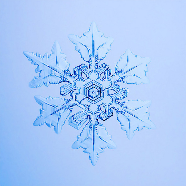"""Unframed Print: Snowflake 9496 - $25  Framed Print: Snowflake 9496 - $50  Blank Greeting Card: Snowflake 9496 - $3  Please click here to order: <a href=""""mailto:ajstudio@alaska.com?subject=ATTENTION: SNOWFLAKE ORDER"""">ajstudio@alaska.com</a>"""