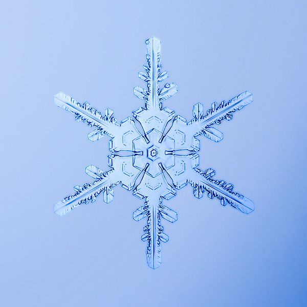 """Unframed Print: Snowflake 8895 - $25  Framed Print: Snowflake 8895 - $50  Blank Greeting Card: Snowflake 8895 - $3  Please click here to order: <a href=""""mailto:ajstudio@alaska.com?subject=ATTENTION: SNOWFLAKE ORDER"""">ajstudio@alaska.com</a>"""