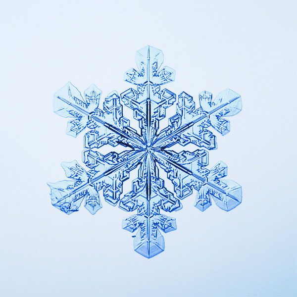 """Unframed Print: Snowflake 9514 - $25  Framed Print: Snowflake 9514 - $50  Blank Greeting Card: Snowflake 9514 - $3  Please click here to order: <a href=""""mailto:ajstudio@alaska.com?subject=ATTENTION: SNOWFLAKE ORDER"""">ajstudio@alaska.com</a>"""