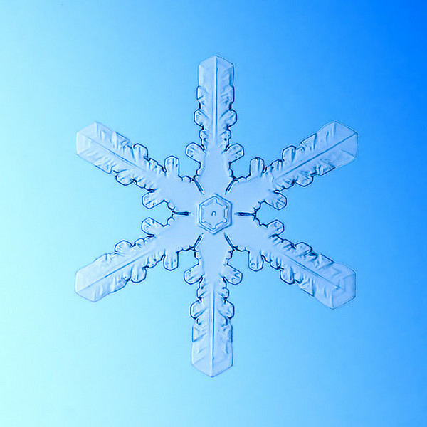 """Unframed Print: Snowflake 8887 - $25  Framed Print: Snowflake 8887 - $50  Blank Greeting Card: Snowflake 8887 - $3  Please click here to order: <a href=""""mailto:ajstudio@alaska.com?subject=ATTENTION: SNOWFLAKE ORDER"""">ajstudio@alaska.com</a>"""