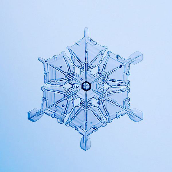 "Unframed Print: Snowflake 9468 - $25  Framed Print: Snowflake 9468 - $50  Blank Greeting Card: Snowflake 9468 - $3  Please click here to order: <a href=""mailto:ajstudio@alaska.com?subject=ATTENTION: SNOWFLAKE ORDER"">ajstudio@alaska.com</a>"