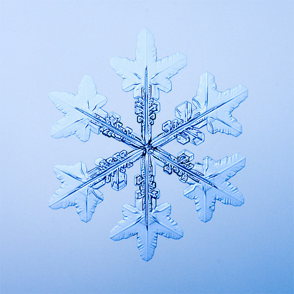 """Unframed Print: Snowflake 9464 - $25  Framed Print: Snowflake 9464 - $50  Blank Greeting Card: Snowflake 9464 - $3  Please click here to order: <a href=""""mailto:ajstudio@alaska.com?subject=ATTENTION: SNOWFLAKE ORDER"""">ajstudio@alaska.com</a>"""