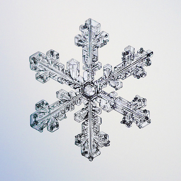 "Unframed Print: Snowflake 8654 - $25  Framed Print: Snowflake 8654 - $50  Blank Greeting Card: Snowflake 8654 - $3  Please click here to order: <a href=""mailto:ajstudio@alaska.com?subject=ATTENTION: SNOWFLAKE ORDER"">ajstudio@alaska.com</a>"