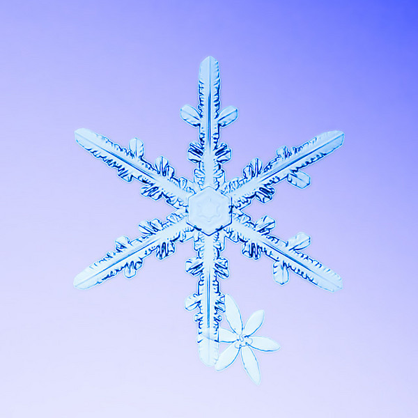 """Unframed Print: Snowflake 8914 - $25  Framed Print: Snowflake 8914 - $50  Blank Greeting Card: Snowflake 8914 - $3  Please click here to order: <a href=""""mailto:ajstudio@alaska.com?subject=ATTENTION: SNOWFLAKE ORDER"""">ajstudio@alaska.com</a>"""