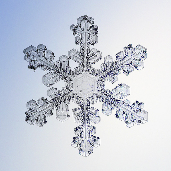 """Unframed Print: Snowflake 8653 - $25  Framed Print: Snowflake 8653 - $50  Blank Greeting Card: Snowflake 8653 - $3  Please click here to order: <a href=""""mailto:ajstudio@alaska.com?subject=ATTENTION: SNOWFLAKE ORDER"""">ajstudio@alaska.com</a>"""